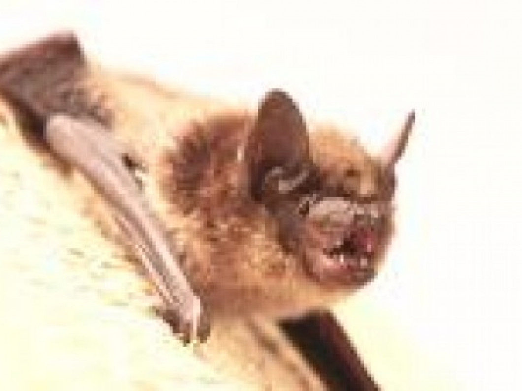 Control and Removal of Bats in Your Living Space: $175.00